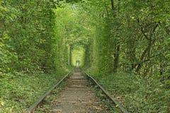 Tunnel van liefde De herfst (Klevan, Rivnenska obl , De Oekraïne) Royalty-vrije Stock Afbeeldingen