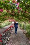 Tunnel van rozen met een jonge vrouw royalty-vrije stock foto