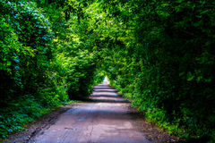 Tunnel of vegetation Stock Images