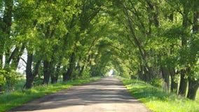 Tunnel vert avec la route Images libres de droits