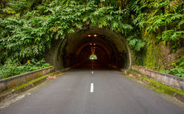 Tunnel vert dans le sao Miguel photo stock