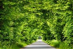 Tunnel vert de route Photos stock