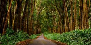 Tunnel view. A surreal road on a road near Waimea, Hawaii Stock Images
