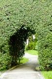 Tunnel vom Baum Lizenzfreies Stockbild