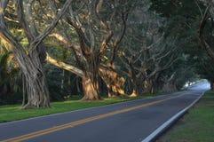Tunnel von Bäumen Lizenzfreie Stockfotos