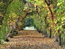 Tunnel von Blättern mit einer kleinen Straße zur Unendlichkeit im November Stockbilder
