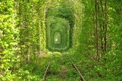 Tunnel von den Büschen auf dem Gleis Stockfotografie