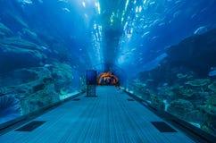 Tunnelen av det dubai akvariet Royaltyfria Bilder