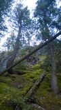 Tunnelgebirgs-Banff-Seitenspur Stockfoto
