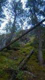 Tunnelgebirgs-Banff-Seitenspur Lizenzfreie Stockfotos
