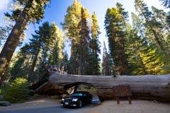Tunnellogin Sequoia Nationaal Park stock fotografie
