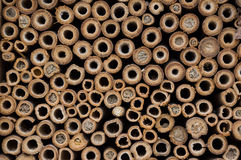 Tunnels. Wooden tunnels in a bee house close up royalty free stock images