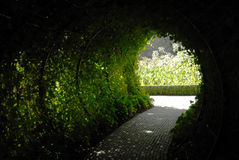 tunnelvegetation royaltyfri fotografi