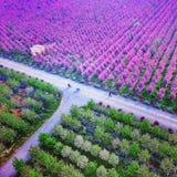 tunnländer av begonian blommar i det Shaanxi landskapet Kina Royaltyfri Bild