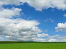 Tunnländer av gröna cornfields under blå sommarhimmel Arkivfoton