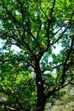 tunt trä Fotografering för Bildbyråer