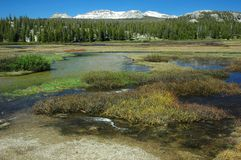 Tuolumne Meadows Spring, Yosemite Royalty Free Stock Image