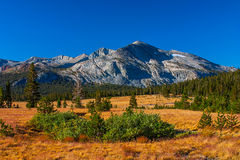 Tuolumne meadows in summer, Yosemite National Park. Royalty Free Stock Photos