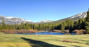 Tuolumneweiden, Yosemite-Park stock foto