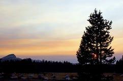Tuolumneweiden, Zonsondergang, Yosemite stock foto's