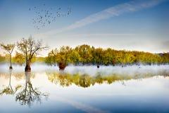 Tupelo-Gummis und obenliegende Enten Lizenzfreies Stockbild