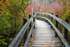 Tupelo Trail at Ferry Beach State Park. The raised boardwalk on the Tupelo Trail at Ferry Beach State Park in Saco, Maine Royalty Free Stock Photo