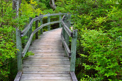 Tupelo Trail at Ferry Beach State Park. The raised boardwalk on the Tupelo Trail at Ferry Beach State Park in Saco, Maine Royalty Free Stock Images