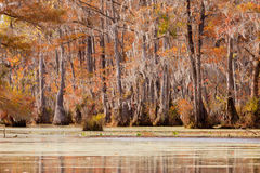 Tupelo wetland Merchants Millpond NC State Park US Royalty Free Stock Images