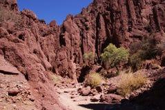 tupiza Боливии Стоковые Фото