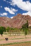 Tupiza - campo del beautifull en Bolivia Imagenes de archivo