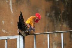 Tupp på ett staket fotografering för bildbyråer