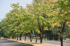 Tuppen vaggar delstatsparken i Oregon royaltyfria foton