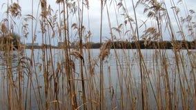 Tur nära sjön med att förbluffa vintersikt stock video