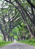 Tur till Afrika, Tanzania Arkivbild