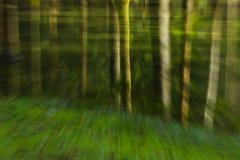 Tur till och med skogen arkivbild