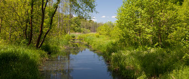 Tural Lesna river in summer midday Stock Photography