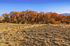 turanga一棵罕见的树在国家储备Altyn-Emel的哈萨克斯坦沙漠干草原的  库存照片