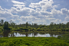 Turba-pantano cerca de Trebon Foto de archivo