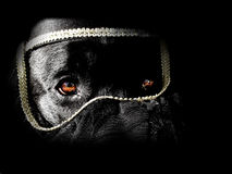 Turban dog. Dramatic lighting reveals the dog behind the turban Stock Photo