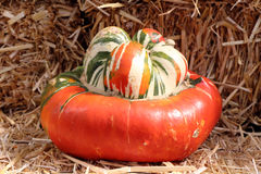Turban pumpkin squash Stock Photo
