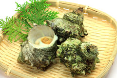 Turban shell. I put three raw turban shells in a colander and I took it Royalty Free Stock Photo