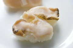 Turban shell sushi Stock Photo