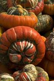 Turban squash Stock Images