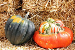 Turban Squash. Acorn and Turban squash with hay for Fall decoration Stock Photo
