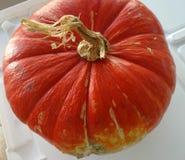 Turban squash attachment end, Cucurbita maxima Royalty Free Stock Image