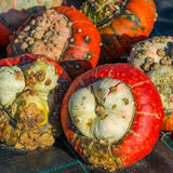 Turban squash Royalty Free Stock Photo