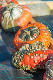 Turban squash Royalty Free Stock Photography