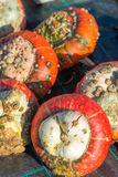 Turban squash Royalty Free Stock Photos