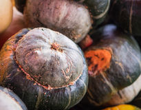Turban Squash. Grey-green turban squash at a fall farmer's market Stock Photo