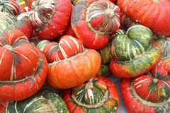 Turban Squash. In a pile Stock Photography